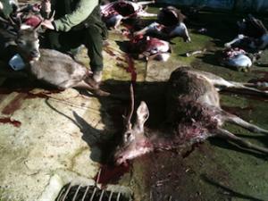 prácticas indeseables en la caza