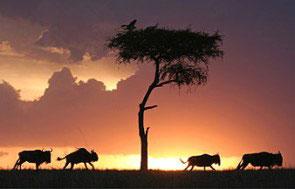seguro para safari
