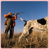seguros para perros de caza