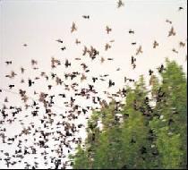 puestos de palomas