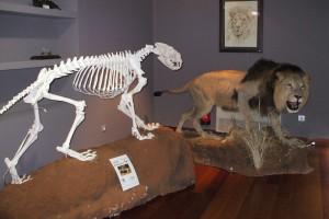 Grandes mamíferos en Cazaworld