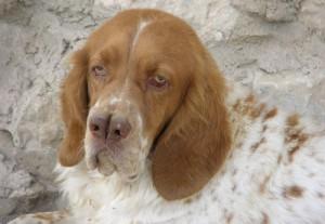 seguro de caza para perros