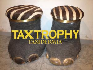 Taxidermia patas de elefante en Cazaworld