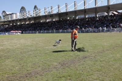 Actividades Semana Verde Galicia 2013: cetrería