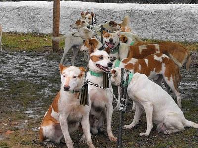 perros  parterninos