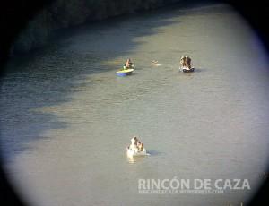 venado-cruzando-el-rio-nadando