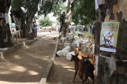 Perros de caza en Intercaza 2013