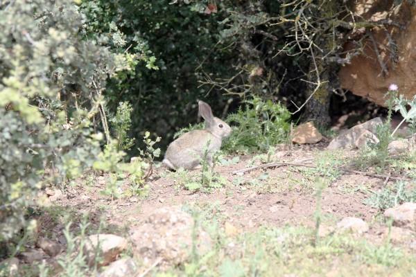 Falta caza menor en Extremadura