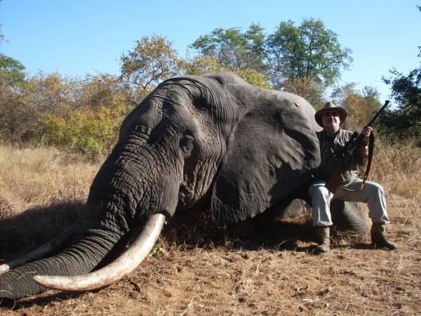 Elefante, Benny Bestard