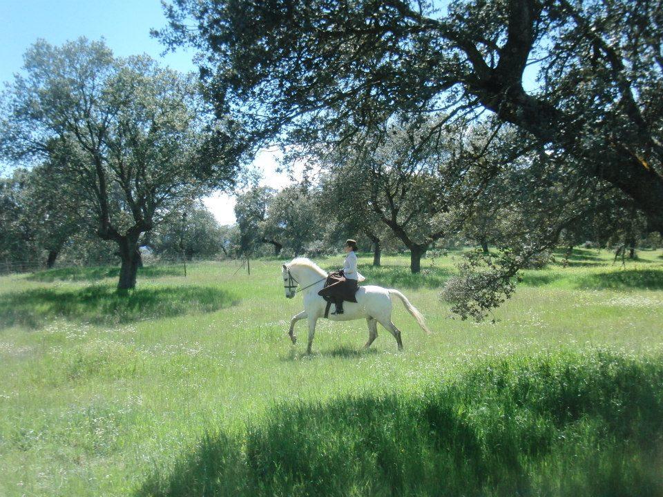 caballo imprescindible en el campo