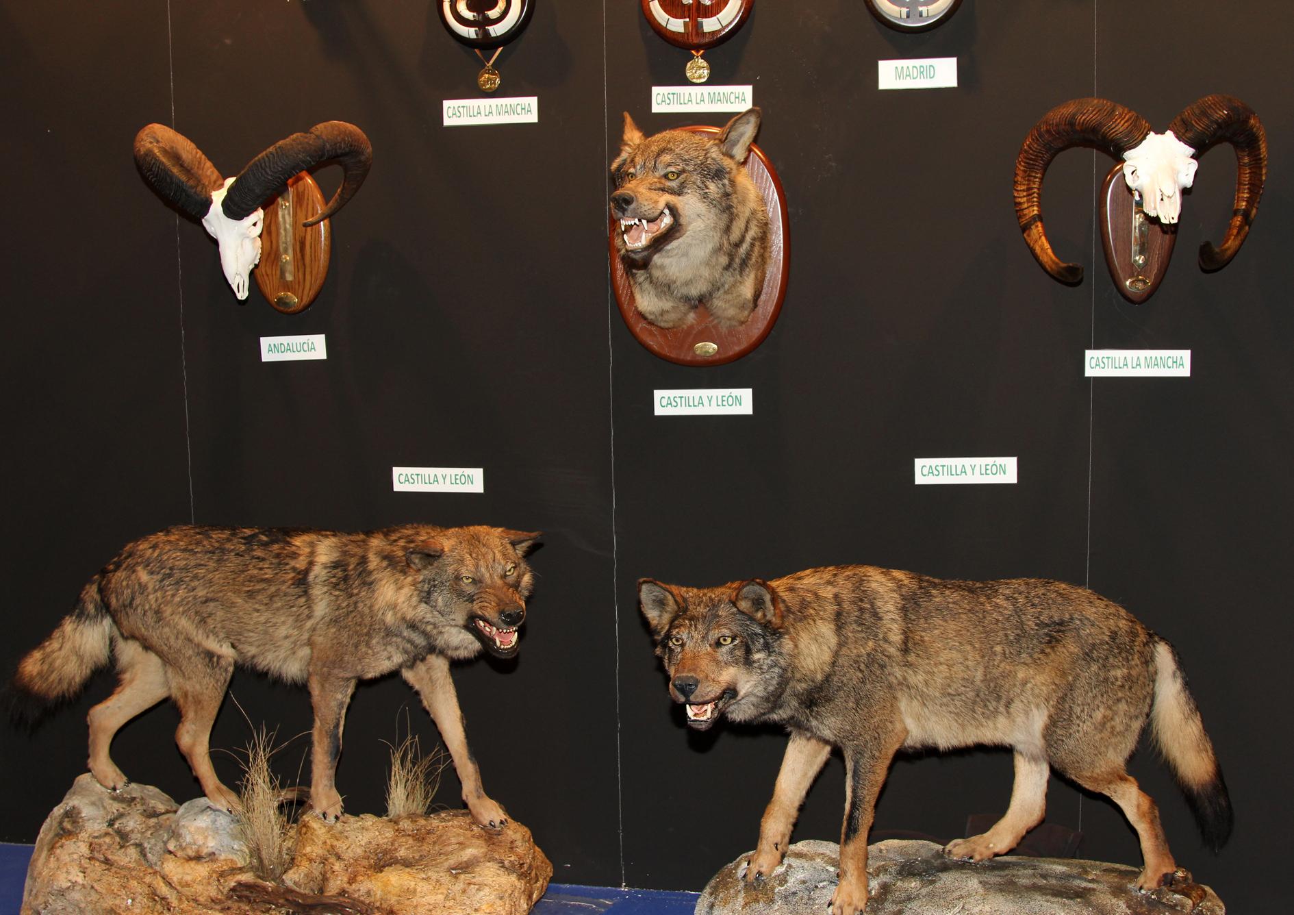Récords de caza en España