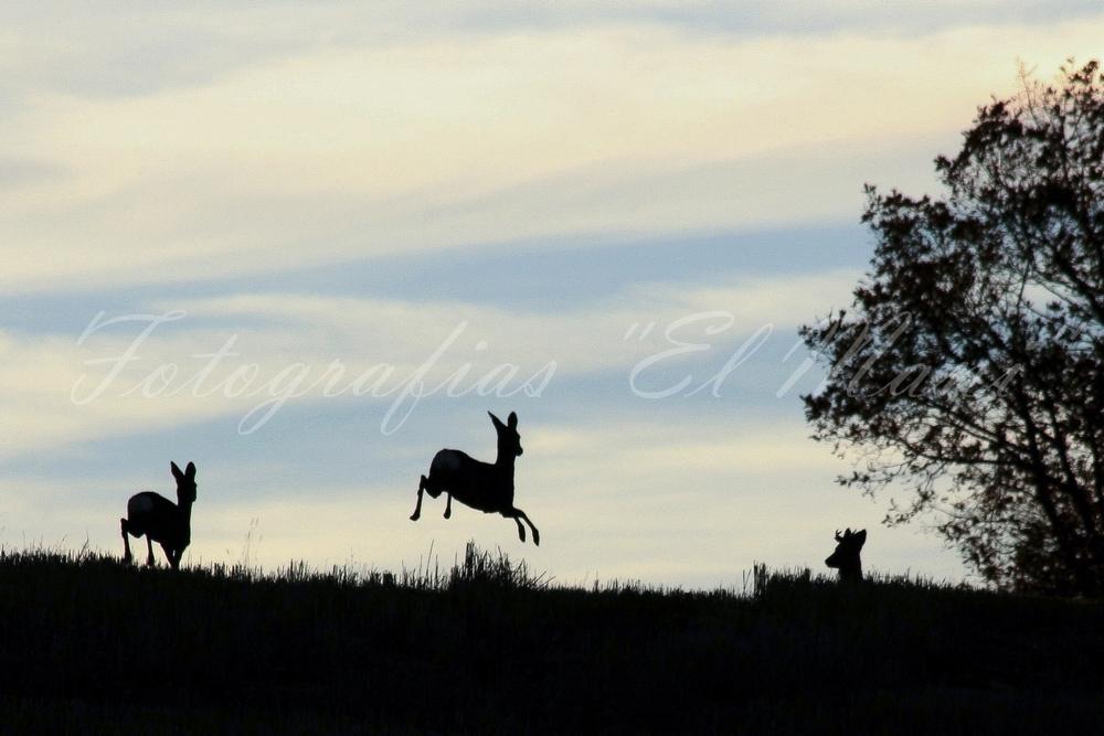 fotografía de caza El Mani