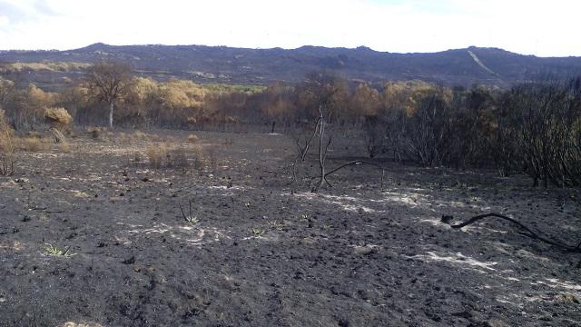 Imagen del terreno arrasado por el incendio del Culedro.