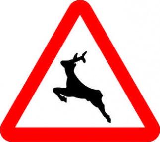 placa trafico animales