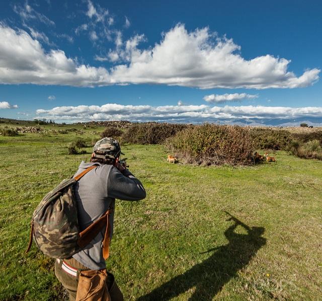 Lance de caza donde el cazador encara un conejo que acaba de salir de las zarzas. Caza con podenco.