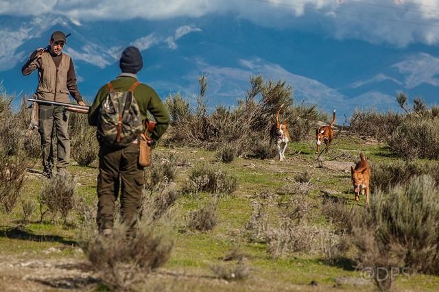 Precio estampa de cazadores cazando con podenco.