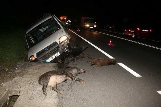 Imágenes de un accidente de una furgoneta Fiat Dobló con 4 jabalíes.