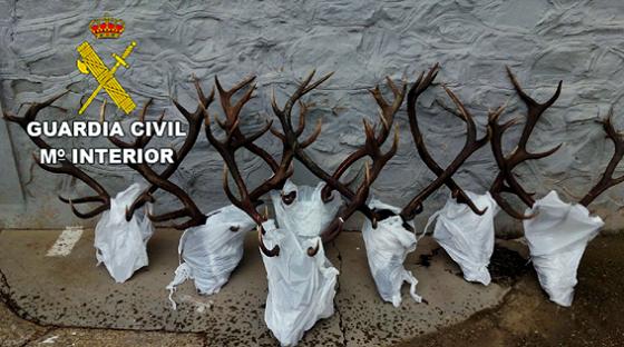 Ciervos hallados por la Guardia Civil en una nave de ganado. Habían sido cazados ilegalmente.