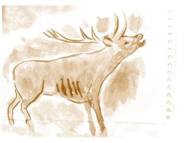 Dibujo ciervo de Pablo Capote.