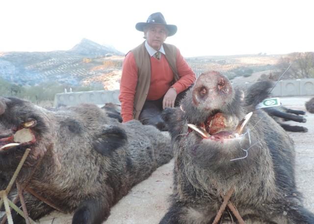 Jabalíes abatidos en la montería Mingo de Gescaza.