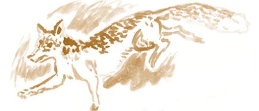 Zorro dibujado por Pablo Capote para Madera de Cazador de Daniel Puerta.