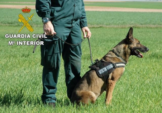 Perro-detector-de-cebos-envenenados