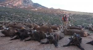GESCAZA Cerro Jaroso Cabecera