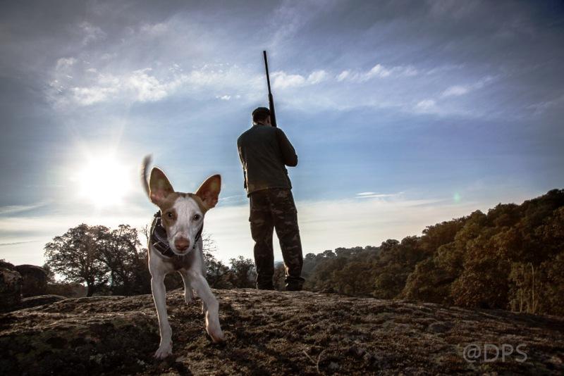 Podenco y cazador