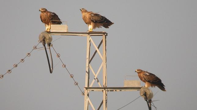 tendidos-electricos-aves--644x362