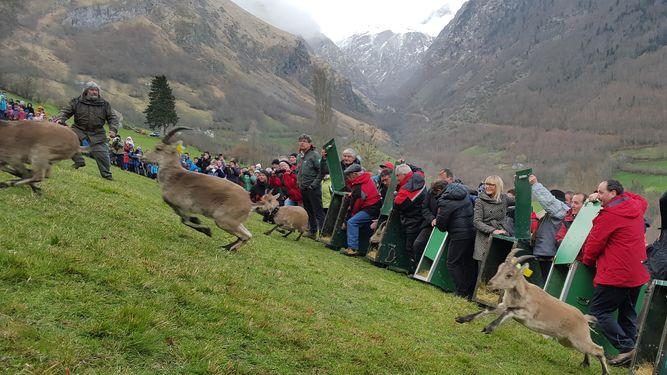 Comunidad-Nacional-Sierra-Guadarrama-Pirineo