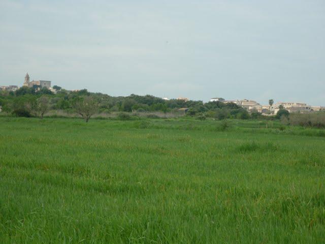 Coto Maria de la Salut Mallorca