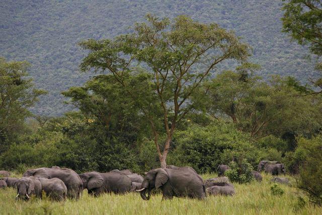 Elefantes - Finbarr O Reilly REUTERS