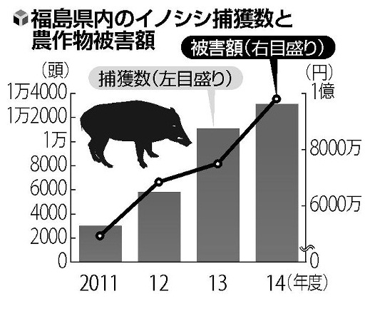 Grafico incremento jabali Yomiuri