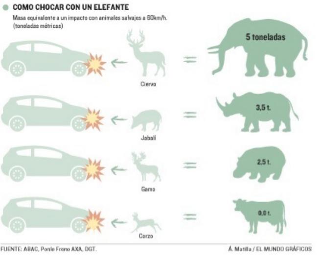 impacto animales