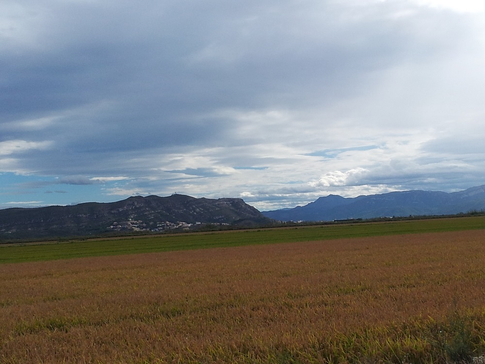 campo valenciano