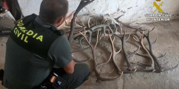 Trofeos de caza recuperados por la Guardia Civil tras ser robados.