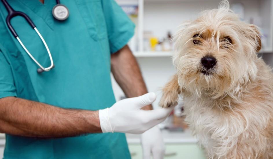 perro-y-veterinario