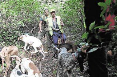 Un grupo de cazadores bate el monte con sus perros / L.V.