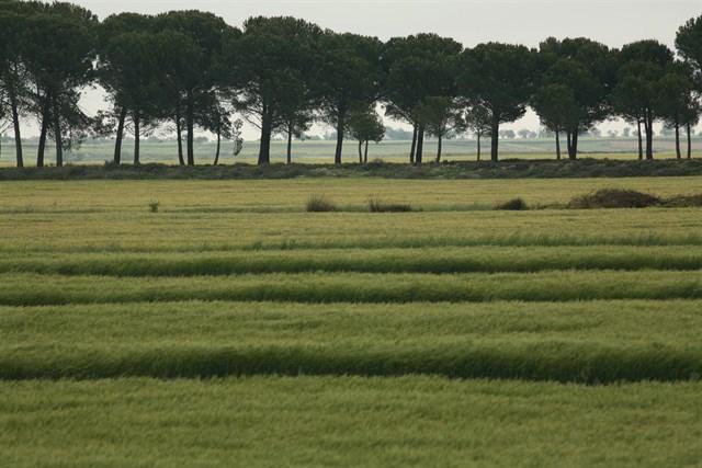 cultivo-siembra