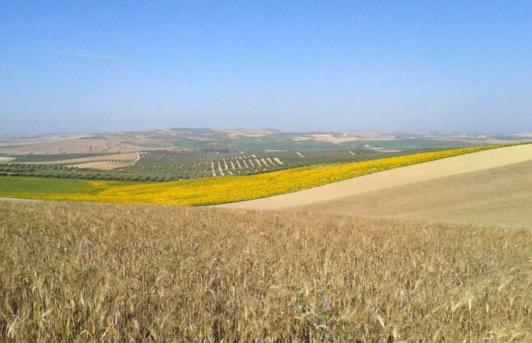 cultivos-biodiversidad