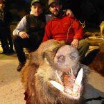 Trofeo de jabalí abatido en la montería celebrada en la finca Bastarás por Cabezas Servicios de Caza