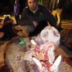 Cazador con jabalí abatido en la montería celebrada en la finca Bastarás por Cabezas Servicios de Caza