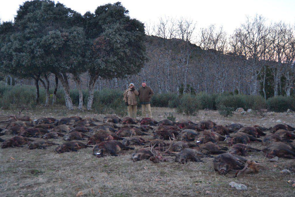 Plantel de reses cobradas en la finca Magañas de Jaén