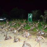 Plantel de reses de la montería en Navalentisco de Cinegética Los Barrancos