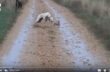 Vídeo con los 10 animales más veloces.