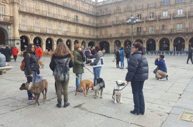 Bajísima afluencia de público en las manifestaciones convocadas contra la caza.