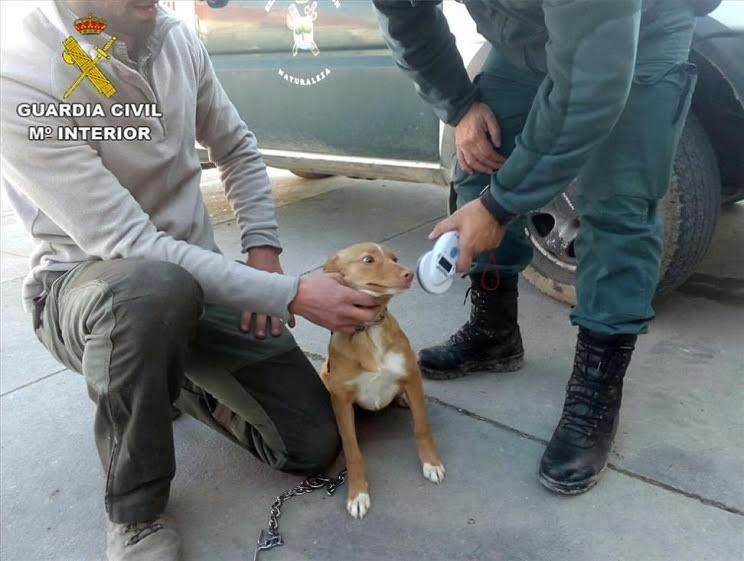 Agente de la Guardia Civil comprobando el microchip identificativo del perro.