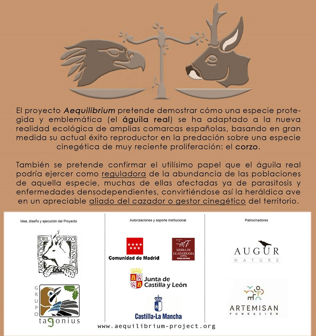 El proyecto Aequilibrium de la Asociación del Corzo Español estudiará el águila real y el corzo.