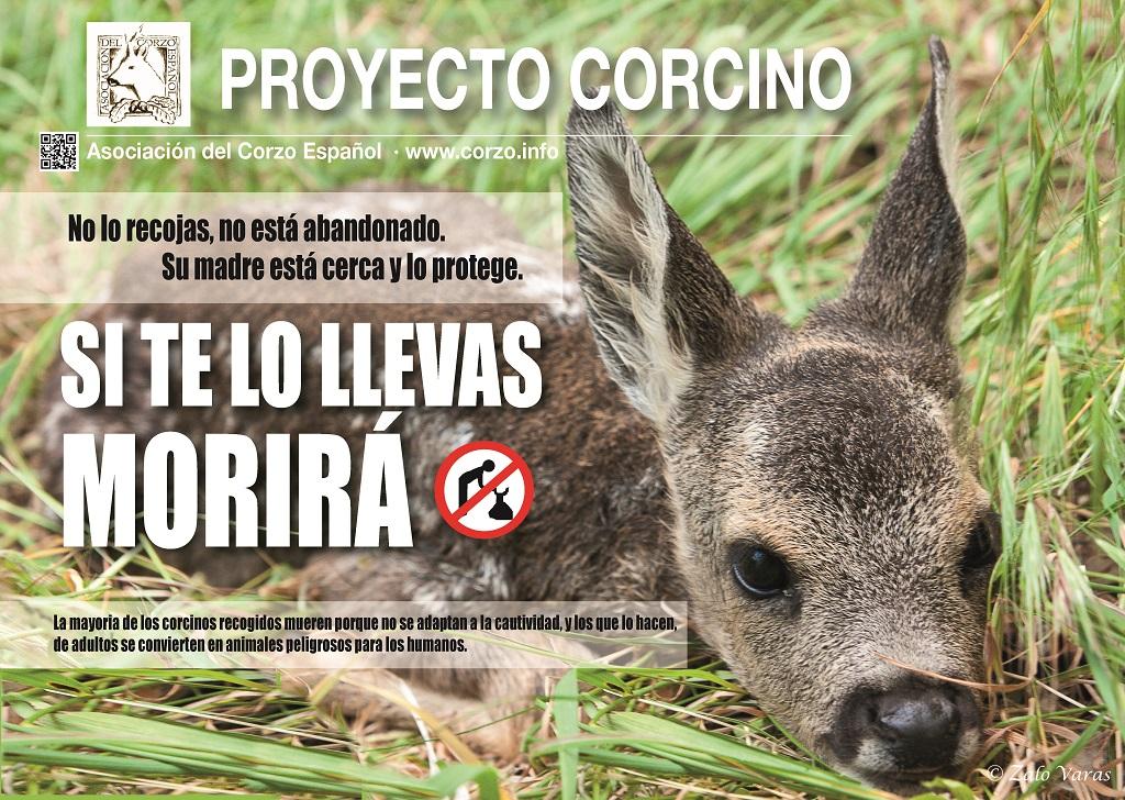 Cartel del Proyecto Corcino 2017 de la Asociación del Corzo Español.