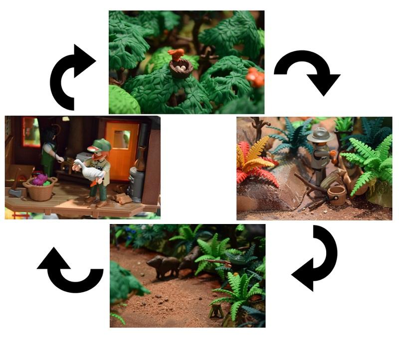 En este esquema se ven como pollitos y rayones crecen en Playmobil.
